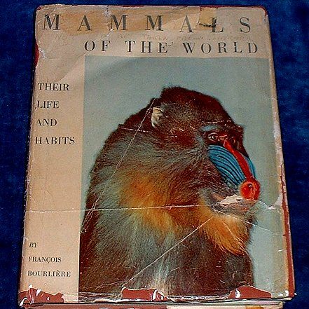 BOURLIERE, FRANCOIS - MAMMALS OF THE WORLD Their Life and Habits