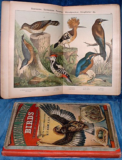 Kirby,W. F. - NATURAL HISTORY OF BIRDS for the use of Young People ... with 30 coloured plates. 1889